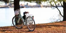 Bicycle leaning on a tree near water